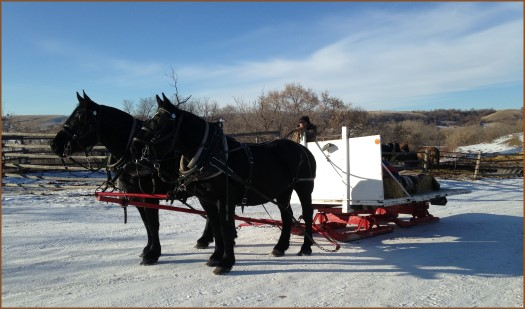 Beaver Creek Ranch - Lumsden, SK, Sleigh rides and hay rides